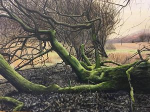 Weeping Willow by Rebecca Gallop